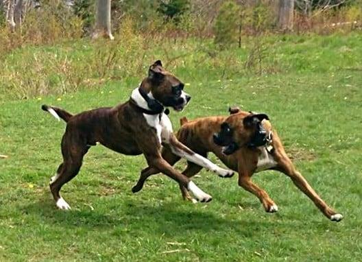 Dog Training Halifax NS Canada