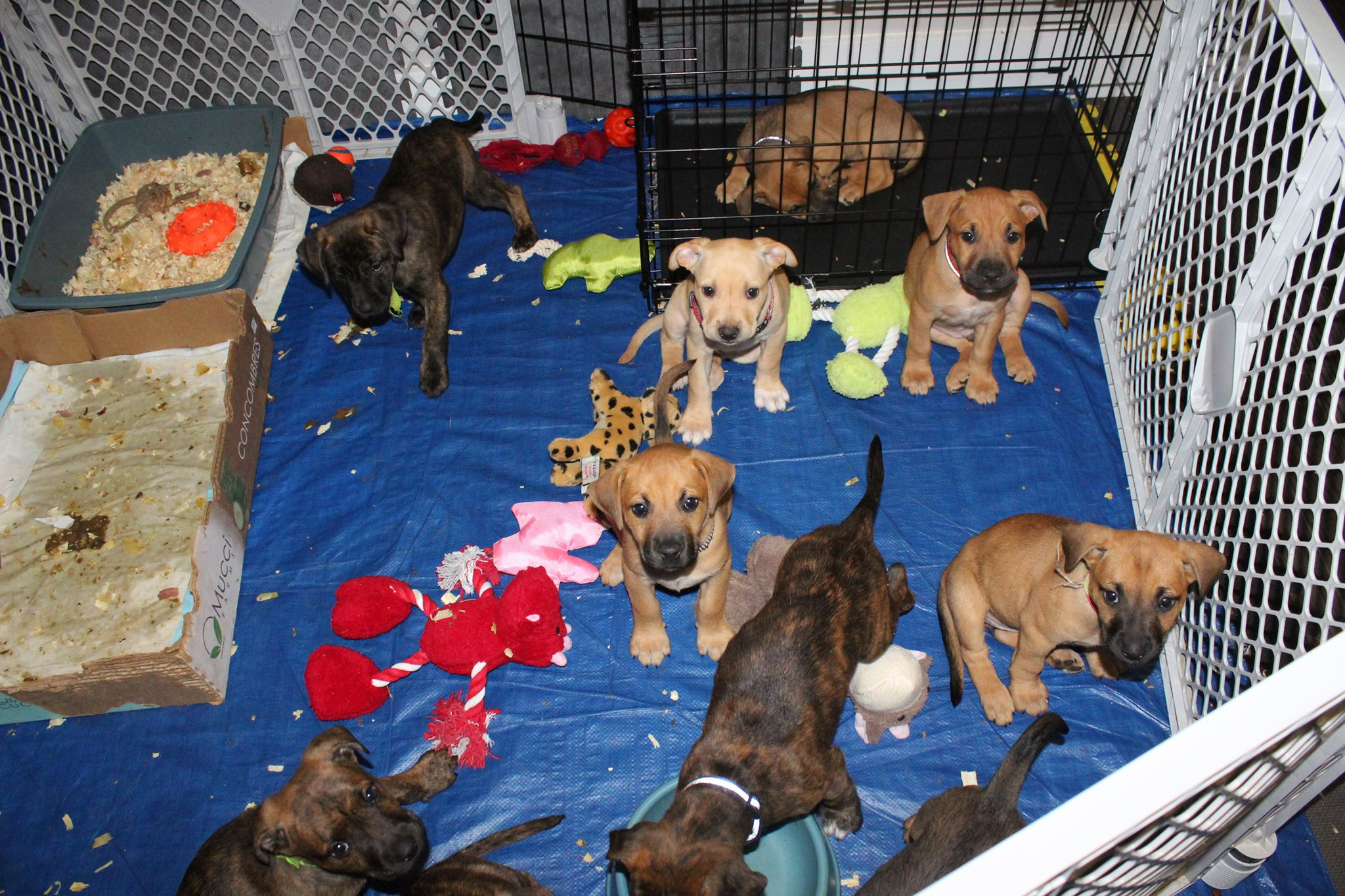 How Much Money Can You Make As A Dog Breeder